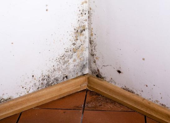 Wilgoć i grzyb w domu - przyczyny i zapobieganie